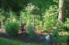 My back hillside garden