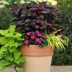 This site is AWESOME. photo gallery of containers with instructions to plant and description of flowers-- for full sun, partial, shade etc. Love the ideas on which plants/flowers to mix & size of containers to put them in. Outdoor Plants, Garden Plants, Outdoor Gardens, Shaded Garden, Garden Spaces, Container Plants, Container Gardening, Full Sun Flowers, Deco Floral