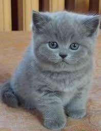 Картинки по запросу котята фото