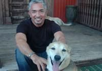 Why Dogs Bite, and How to Avoid   Cesar Millan