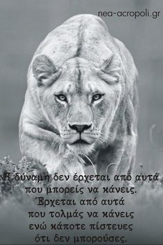 The Lioness is most beautiful when hunting her prey, Leo Quotes, Mommy Quotes, Greek Quotes, Leo Season Memes, Lioness Quotes, Quitting Quotes, Astrology Leo, Leo Zodiac, Fantastic Quotes