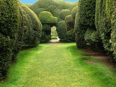 Yew Hedges at Holme Lacy House. by saxonfenken, via Flickr