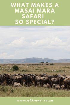 Masai Mara Safari Kenya - A Unique African Safari Experience - Travel African Safari, Kenya, Dreams, Unique, Blog, Travel, Viajes, Blogging, Destinations