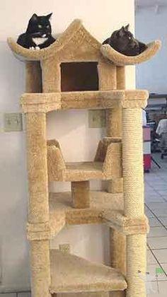 Casinhas e arranhadores para gatos