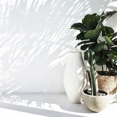 White walls shadows and some greenery. easy like a Sunday morning . thanks to the uber talented - Architecture and Home Decor - Bedroom - Bathroom - Kitchen And Living Room Interior Design Decorating Ideas - Lime Paint, Belle Plante, Plants Are Friends, Green Plants, Pot Plants, Belle Photo, Houseplants, Interior Styling, Interior Design