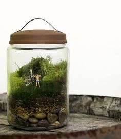 thepeagreenboat_TwigTerrariums_12