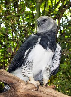Accipitridae - Eagles, hawks and falconphotos Cool Pictures Of Animals, Cute Animals, The Eagles, Harpy Eagle, Bird Gif, Golden Eagle, Types Of Animals, Big Bird, Birds Of Prey