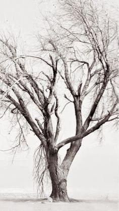 Poesías  por Miguel Adame Vazquez.: Vas dormitando recuerdos.