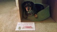 Dog Shame | I ate Mommy's razor. Pink is my favorite flavor!