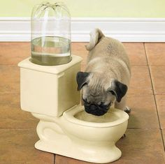 toilet water bowl - Keeping pets away from drinking water from the toilet can get frustrating for pet owners; for such cases, this Toilet Water Bowl will be a fun and . Ideas Para Inventos, Dog Toilet, Toilet Bowl, Funny Animals, Cute Animals, Creative Inventions, Crazy Inventions, Awesome Inventions, Awesome Gadgets