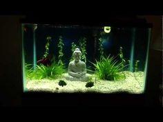 20 gallon freshwater planted aquarium 10 gallon betta plant - YouTube