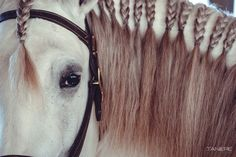 — Horse's Eye. #horse #white #gray #mane #braids #ponytails #pigtails #tails