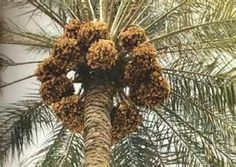 صور نخيل العراق Holiday Decor Christmas Wreaths Beautiful