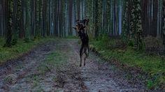 Niedzielny spacer z psem | Sunday walk with the dog