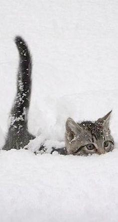snow cat  #photo by Luke O'Connor -- www.plus.google.com