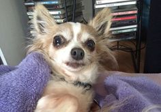 Do you think this pet is the cutest? Click the photo and go vote! (no login required)