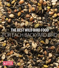 Our backyard birding experts are here to help you attract the birds you want to see. Get resources and tips on our website. Wild Bird Food, Wild Birds, Wild Bird Feeders, Backyard Birds, Unique Recipes, Seeds, Website, Tips, Counseling
