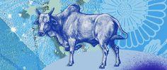 bull - Matt Herring/Getty Images