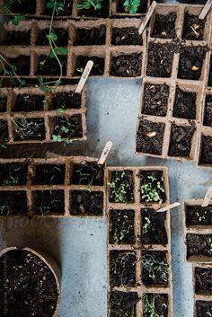 9 Agreeable ideas: Front Yard Vegetable Garden How To Grow vegetable garden terrace lush.Vegetable Garden Signs How To Grow vegetable garden architecture dreams. Herb Garden, Vegetable Garden, Garden Plants, House Plants, Garden Soil, Biointensive Gardening, Buy Indoor Plants, Palmiers, Farm Gardens