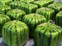 Conheça as melancias quadradas do Japão