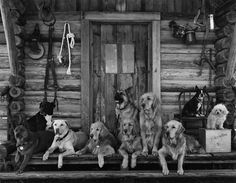 Jed Klampitt Doggies.. from the Beverly Hillbillies there gold in them there hills.  Nice family of dogs living togther on a porch