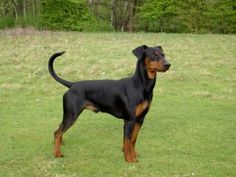 tyske hundenavne