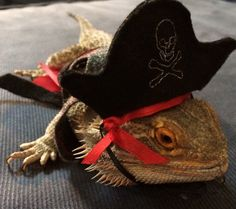 Felt Pirate Costume for Bearded Dragons. Hat by PamperedBeardies