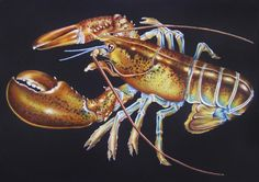 Maine Lobster Page 29 Intricate Ink Animals In Detail A Coloring Book By