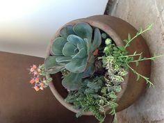 #succulents