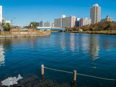 左奥は旧中川と中川大橋、その向こうに都営新宿線の西大島駅がある。中川大橋の麓に川の駅があって、水陸両用バスが川へ入る場所=スプラッシュポイントがある
