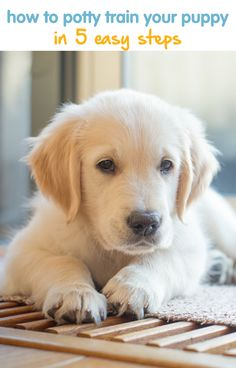 1000 images about fuzzy bundles of love on pinterest With potty train your dog fast