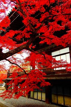 Kyoto in fall <3