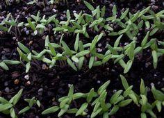 Organic Gardening – Sowing My Wild Seeds Part One http://planetforward.ca/blog/organic-gardening-sowing-my-wild-seeds-part-one/