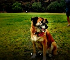 Dog Gone Walkin' provide a high quality of care to your Pets and PROFESSIONAL DOG WALKER in Esquimalt. They know how to assess if a pet is not feeling well and can send to the vet immediately at all times of the day. Feeling Well, Pet Grooming, Feel Better, Your Pet, Times, Dog, Pets, Animals, Diy Dog