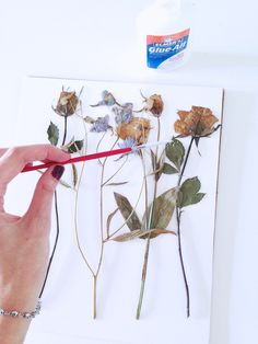 how to press flowers botanicals (apairandasparediy)