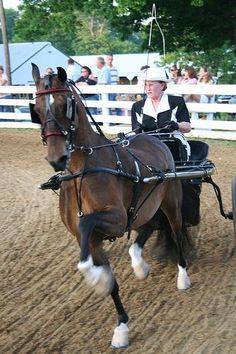 Hackney Horse | Hackney pony | Facebook
