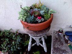 succulent garden bowl and terrariums