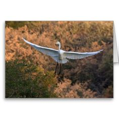 An Egret flies Greeting Cards