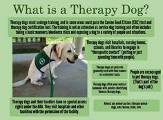 Really hoping to get a therapy dog- I'm doing my research now