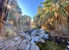"Coachella Valley on Instagram: ""Palm Canyon @CoachellaValley Photo! - by Krisie Cook"" Coachella, Places To Go, Water, Outdoor, Instagram, Gripe Water, Outdoors, Outdoor Games, The Great Outdoors"