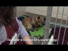 1/26/18 - S.URGENT ! - Little Puppy Josephine 6 months Needing Rescue ASAP!