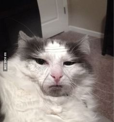 Guy aged his cat 60 years with an aging app.