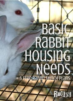 There is no one style of rabbit housing that is suitable for all situations, but there are certain basic rabbit housing needs that should be met regardless of the type of housing used. Raising Rabbits For Meat, Meat Rabbits, Rabbit Hutch Plans, Rabbit Hutches, Bunny Cages, Rabbit Cages, Free Rabbits, Rabbit Breeds, Angora Rabbit