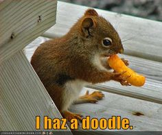 Cheez Doodle-eating squirrel