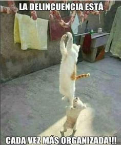 Gatos locos