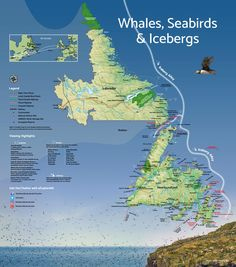 A map of popular places to see whales, birds and icebergs in Newfoundland and Labrador. Newfoundland Tourism, Newfoundland Canada, Newfoundland And Labrador, Hermitage Bay, Belgium Germany, Us Road Trip, Sea Birds, World Heritage Sites, Travel Ideas