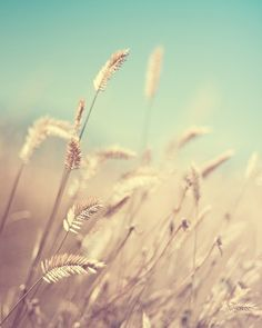 Hydrolysed Wheat Protein greatly increases the hair's ability to retain moistures, adds volume to hair, reduces the hair's porosity, and improves smoothness which is why it is found in many of our naturally better products!