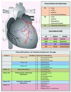 12 Lead EKG Pocket Card