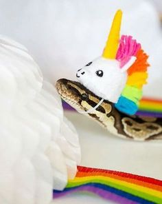 Not my image Snakes With Hats, Cool Snakes, Cute Reptiles, Reptiles And Amphibians, Animals And Pets, Baby Animals, Cute Snake, Beautiful Snakes, Ball Python