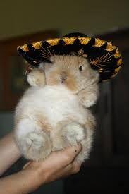Sombrero Bunny http://slacktiverse.files.wordpress.com/2013/02/bunny-in-sombrero.jpg